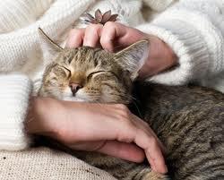 caresser un chat