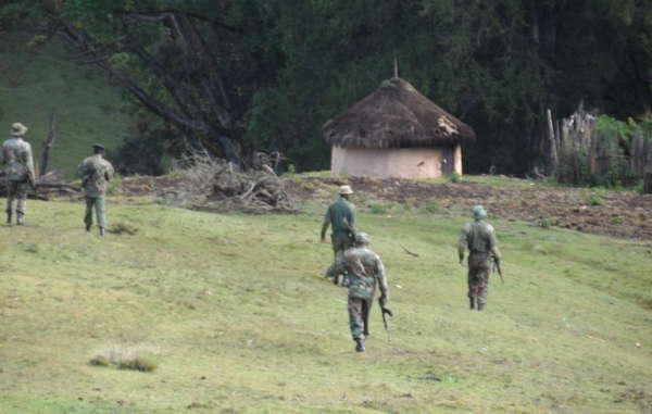 Les gardes arrivent dans la forêt